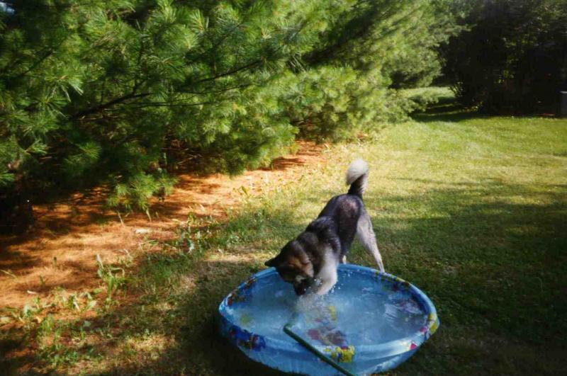 - Gypsy - loved her swimming pool!